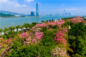 Nice and Zhuhai -- cities where love flourishes
