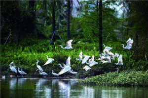 Five fabulous birding spots in Guangzhou