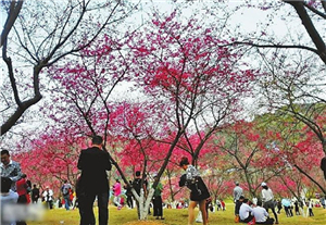 Shimen park, a destination for red leaves and hot springs