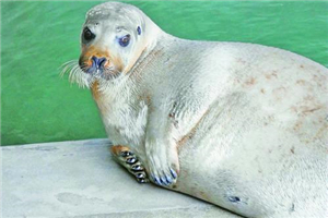 Whiskered seal pups join Ocean Kingdom's ménage