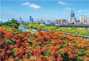 Hit this list of recommended flower routes in Shenzhen