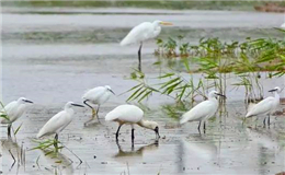 Six great places to go birding in Guangdong this spring