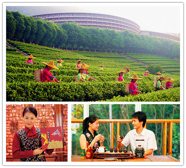 Yearning Tea Plantation Tourist Attraction